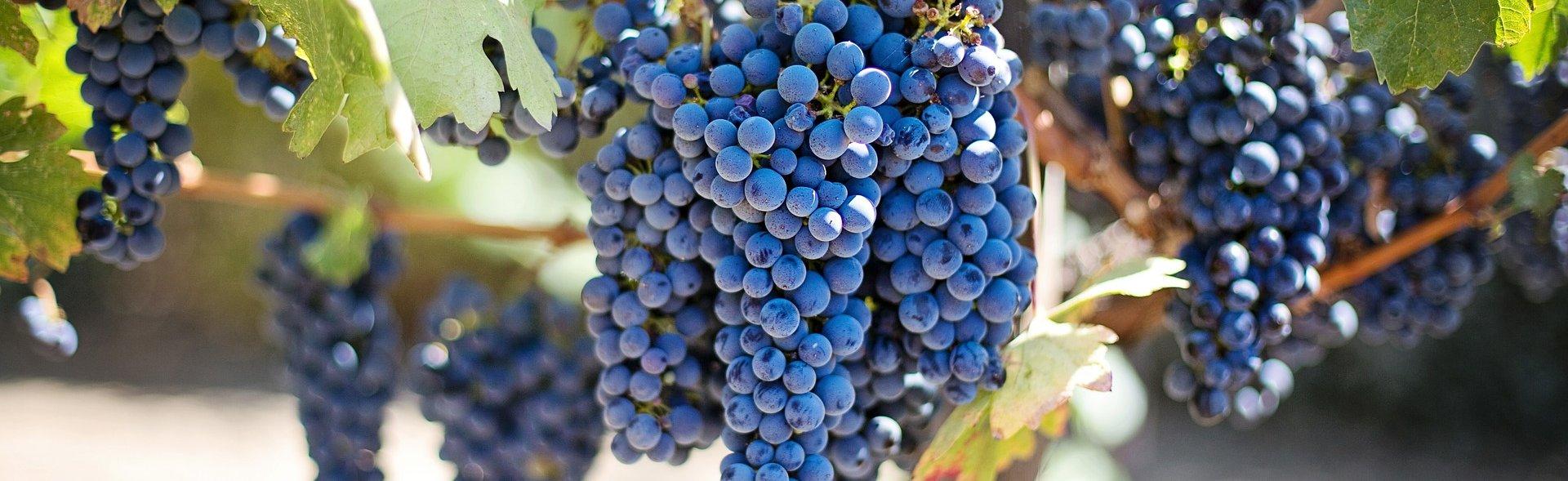 Wine Jellies